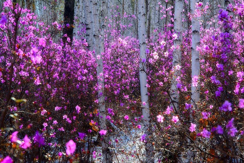 скачать песню цветет калина фристайл