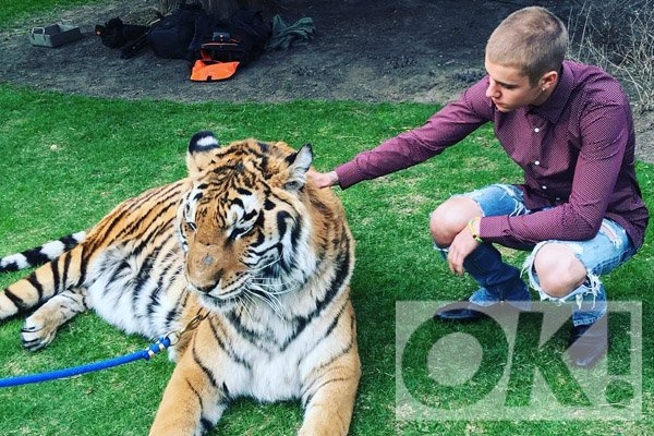 Justin Bieber caught up in latest social media scandal — this time with tigers: