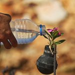 Palestinian lady collects gas bombs fired by Israeli army. She grows flowers in these bombs. https://t.co/DabJKhTVBe