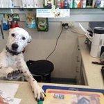 desculpe senhor foi a justiça que mandou bloquear eu sou apenas um dog eu apenas cumpro ordens https://t.co/8OtuGiHnOO