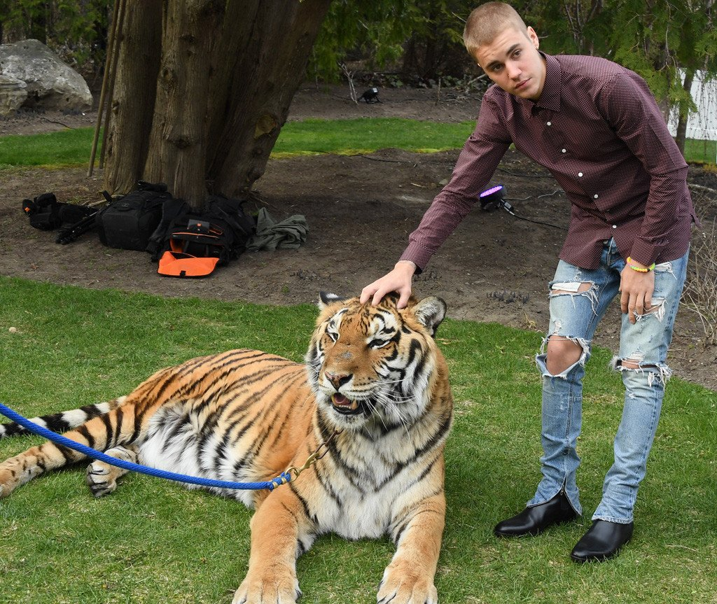 PETA thinks Justin Bieber should be sorry for posing with a chained tiger: