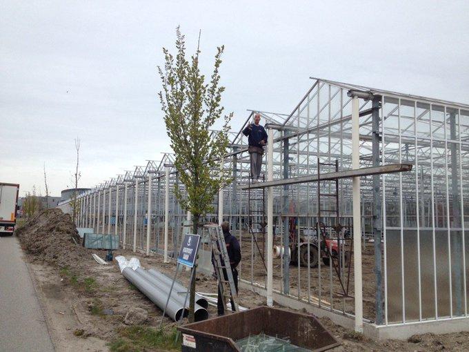 Er worden weer kassen gebouwd in het Westland zoals 3500m2 aan de Galgeweg in Naaldwijk https://t.co/TzBlRvLWl1