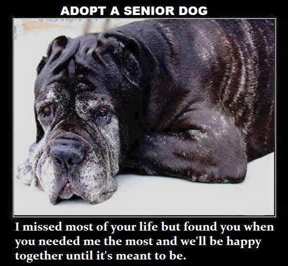 #AdoptaSeniorPet  There is a special place in Heaven for the angels that take seniors into their homes. https://t.co/Xw3O1JeYOJ
