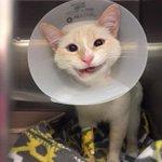 น้องแมวไร้บ้านโดนรถชนปางตาย กรามหัก หมอที่รพ.สัตว์ในเท็กซัสไม่ยอมให้ตายผ่าตัดกรามให้ พักฟื้นเดือนกว่าออกมายิ้มสวยเลย https://t.co/nySUyfC7JY