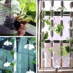 Pra que Whatsapp se você pode falar com as plantas? Veja 4 hortas criativas para sua casa https://t.co/vmoQztANkL https://t.co/cpetY4x5ON