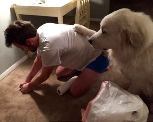 When you're cleaning up your dogs mess and he appreciates it