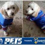 For every RT & LIKE @wildcat_laura_6s lady gets, @CoventryHomes will donate $1 to @EdmontonHumane! #OilersPets https://t.co/LsH6Qjxrgh
