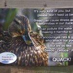 Dont feed the ducks bread! #Edinburgh (via @FiggatePark) https://t.co/CqWBV0iIgR