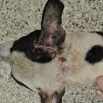 Bradenton woman charged with animal cruelty by @BradentonPolice https://t.co/zhyYH8B9uY https://t.co/xTgloTfwQl