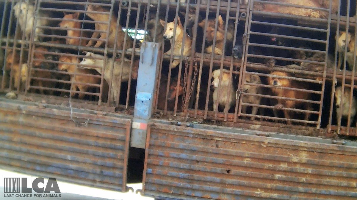RT @LC4A: !! GO TO https://t.co/ARgp3boORU to sign urging President Xi Jinping to BAN DOG & CAT MEAT in #China #stopdogmeat https://t.co/0M…