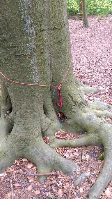 Dit trof een wandelaarster gisteren aan in het Staelduinsebos. Mogelijk loopt er een gedumpte hond los in het bos. https://t.co/tdKuqgdeRs