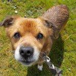 DOB perro de 12 años en #adopcion en #Madrid 635 03 25 59 https://t.co/cRAQOETWAg