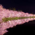 弘前公園の夜桜。桜前線を追いかけて青森まで行ってきました。 桜と影絵みたいな世界が綺麗 https://t.co/eVm5pcMqET