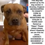 HIPPOs been found in UK but his microchip details are out of date Reported STOLEN 10 yrs ago from #Cork #Ireland RT https://t.co/hOewtaXs05