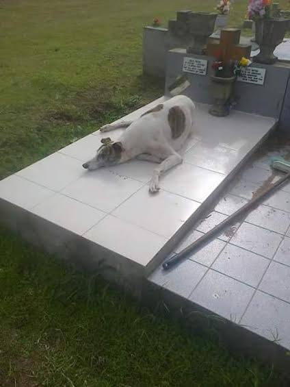 Roberto no tenía nada, pero amaba a los perros. Murió el viernes. Un galgo lloraba en su entierro. Hablame de amor. https://t.co/LKrmK8XjnG