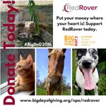 #Animals from crisis 2 care thru #RedRoverRelief. #BigDog2016 @bigdayofgiving @sacregcf https://t.co/4mhJdwg29C https://t.co/4MIQJC4n2Q