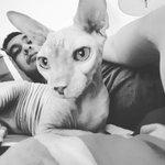 Kucing gue Ping hari ini meninggal, ditemukan kaku di dalam kamarnya. Breaks my heart. Tenang di sana ya, kawan. https://t.co/jX4e3WSktb