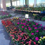 Our #GardenCentre is #blooming! Come & see bright & beautiful hanging baskets for $12.99! #ptbo #gardening @sobeys ???? https://t.co/6m8w6lD87I