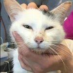 Cette jolie chatte blanche a besoin de vous pour son opération de la dernière chance https://t.co/O9BUX9FsAF https://t.co/RegodwD58Y