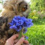 Дарите совушкам цветы. https://t.co/3n7N92aQW1