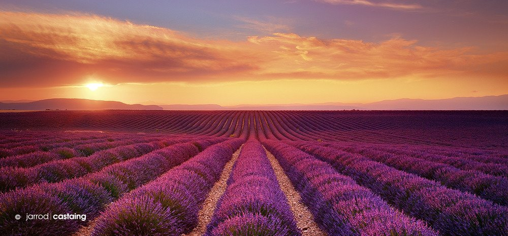 #Sunset over lavender fields, Provence, France | Photography by ©Jarrod Castaing https://t.co/6NzpAPFs4X
