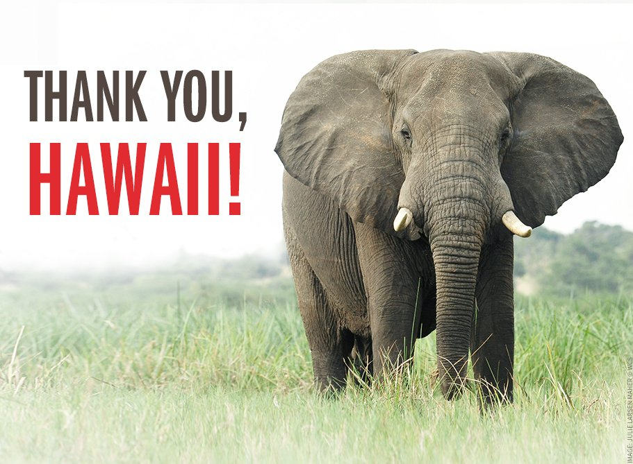 Hawaii Senate passes bill to END the trade of wildlife products! Exciting news this evening! #HISavingSpecies https://t.co/qVQkeKUrc3
