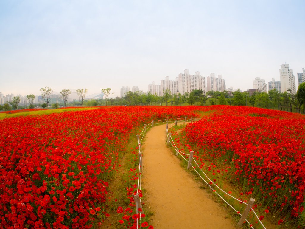 Spring in Incheon, #SouthKorea   Photography by ©Kang Heewan https://t.co/nW60K4Ul3R