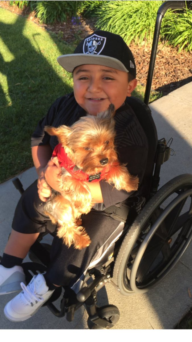 This 10-yr-old's therapy dog, Buddy, is missing from Crenshaw District. His heartbreaking story on @KTLA at 10pm https://t.co/qIbRlw9Csj