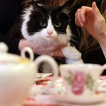 Cat cafe set to open in Liverpool this year https://t.co/Qd3qeupFBN https://t.co/a9TbFrEEar