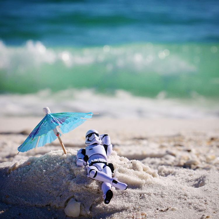The Florida is strong in this one. @StarWars #MayThe4thBeWithYou #LoveFL https://t.co/9vKpiKKLEa