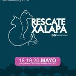 ¡Ayúdanos a ayudar! Conoce @RescateXalapa y súmate a la causa #Xalapa #ExpoCienciasVeracruz https://t.co/TnaUCRTNnw https://t.co/bZmE4dPxjC