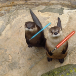 May the 4th be with you. Happy Star Wars Day from Obi Wan and Olive, the river otters! #WNCNatureCenter https://t.co/QKzXVU1idD