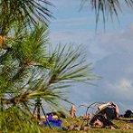 Morgen weer een prachtige dag op #Vlieland. Geniet van #Yoga in de duinen van 17-18 uur. Info en opgeven: 0615164154 https://t.co/gresJypSY0