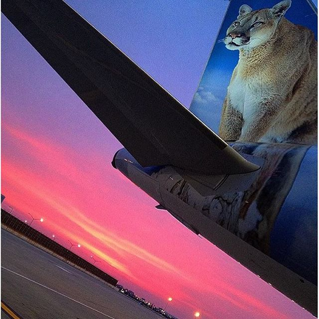 Cougar and Cotton Candy Skies!