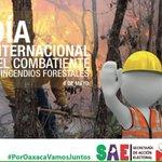 Cuidemos nuestros bosques y valoremos el trabajo de quienes combaten los incendios. @AvilesAlvares @alejandromurat https://t.co/3x8f25uFmp