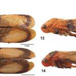 Novas espécies de insetos do Brasil homenageiam Han Solo e Chewbacca https://t.co/cGFqAAzYLQ https://t.co/CYKiOWj5HA