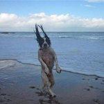meu escritório é na praia eu to sempre na área mas eu não sou da tua laia não... https://t.co/adY15BtKmk