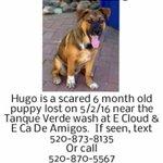 @whatsuptucson Help find Hugo 🐾 https://t.co/2hXWMeUAUl