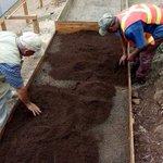 #SPS Vivero de Ladrillos, Cofradia. Se inicia el proceso de germinacion de 50,000 semillas de pino. #SPSVerde https://t.co/EsfKyAPuMW