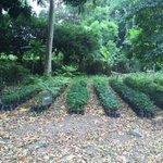 #SPS Vivero Santa Ana. Dispone de 20,000 plantulas maderable, frutales y ornamentales. Tienen que verlo! #SPSVerde https://t.co/XnS8sMKhn0