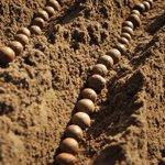 Arrangement of potatoes during planting #AgribusinessTalk254 @amiran_kenya https://t.co/ygQlPDJhpE