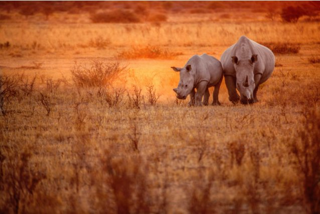 RT @SawubonaSAA: This video will have you longing for a trip to Botswana: @flysaa