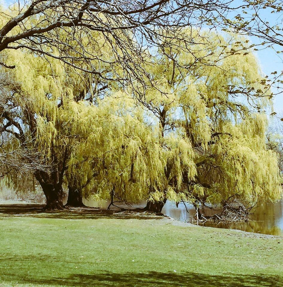 Good Morning. Have a wonderful day and be safe. https://t.co/dteUQ4WXIn