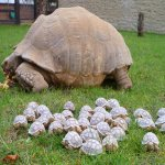 """@araanjum712: @1965Wendy @peac4love https://t.co/Nd8xihA36F"" Shes actually looking out for her turtlettes! Thats a first.,,"