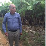 @PUM_nl De Wit is currently touring banana plantations in the Northern Part of #Zim @ITCnews @263Chat #ZimTrade16 https://t.co/vsXPkaGCb1