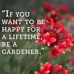 """""""If you want to he happy for a lifetime, be a gardener"""" #Ottawa #Qouteoftheday #Mantraoftheday #GetInvolved https://t.co/pBny6twaz1"""