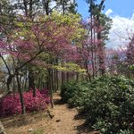 Could the Arb @umich be prettier? #spring in #Michigan #TakeAWalk https://t.co/kvytG2SqXm