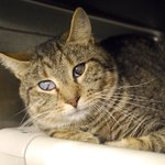SOS! #NYC ! #ADOPT amiable nice-to-strangers&other #cats LOVEb4noonFri! Or #pledge or foster https://t.co/IlQdK4iOBF https://t.co/yxVC6EnEPE