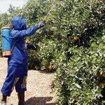 Se perdió 70 % de la producción de café, cacao y fruta https://t.co/EITQrPgCOG https://t.co/GUd3WaCMkm