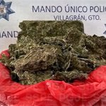 #AccionesCoordinadas SSPE-PGJE-#MandoÚnico #Villagrán aseguran 1,500 dosis de mariguana.   @AlvarCdeV @carloszamarr https://t.co/JdTVWYEurA